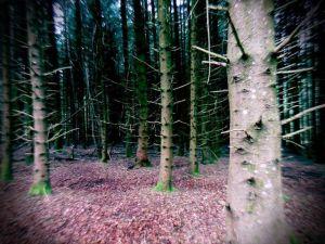 Forêt en Auvergne